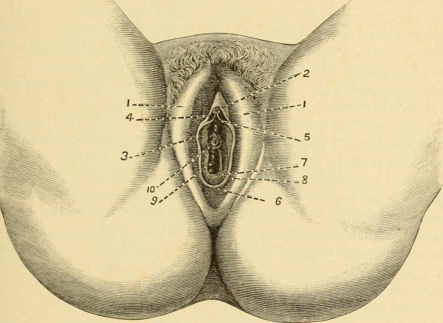 System of Gynecology