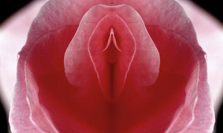 Rose als Symbolbild für Vagina